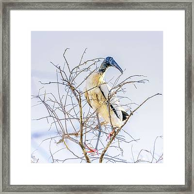 Wood Stork Sitting In A Tree Framed Print