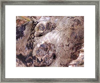 Wood Texture Framed Print by Robert  Collier