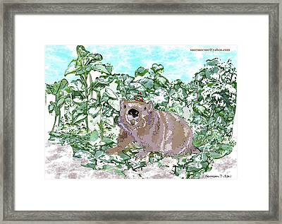 Woodchuck Chuck Framed Print by Susie Morrison