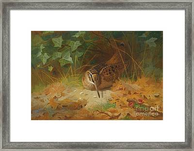Woodcock Framed Print by Celestial Images
