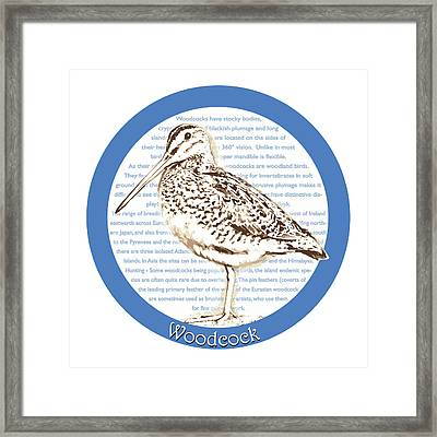 Woodcock Framed Print by Greg Joens