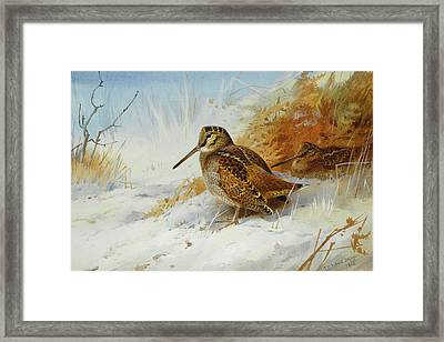 Woodcock In Winter By Thorburn Framed Print