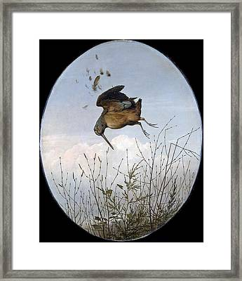 Woodcock Framed Print by Thomas Hewes Hinckley