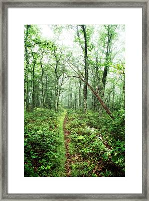 Framed Print featuring the photograph Wooded Trail by Alan Raasch
