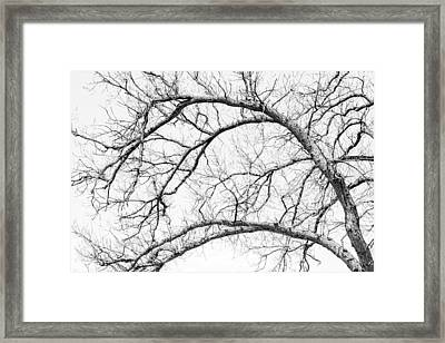 Wooden Arteries Framed Print by Az Jackson