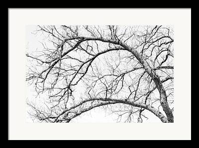 Arteries Framed Prints