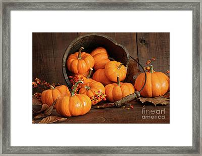 Wooden Bucket Filled With Tiny Pumpkins Framed Print by Sandra Cunningham