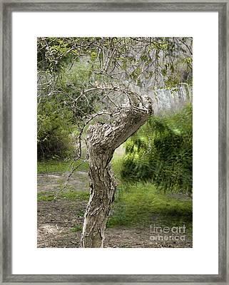 Wooden Heart Framed Print by Viktor Savchenko