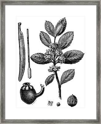 Wooden Spatula, Bombilla, Culha, Mate Branch, Flower, Fruit Framed Print