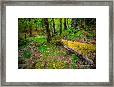 Woodland Framed Print by Adrian Evans