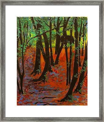 Woodland At Watkins Glen New York Framed Print