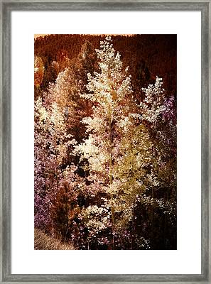 Woodland Beauty Framed Print by Joseph Frank Baraba