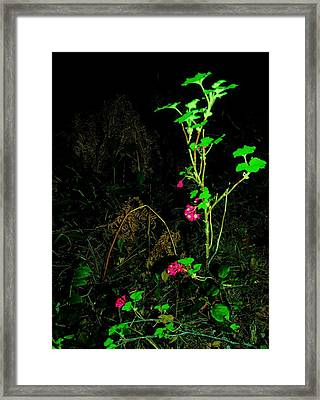 Woodland Bush Framed Print by Mel Crist