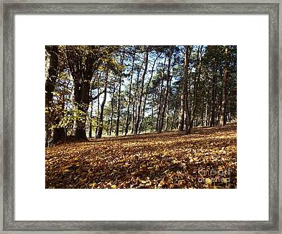 Woodland Carpet Framed Print