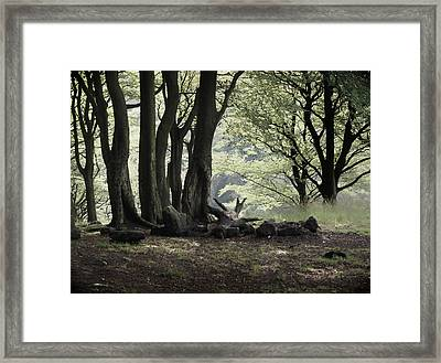 The Woodland Clearing  Framed Print