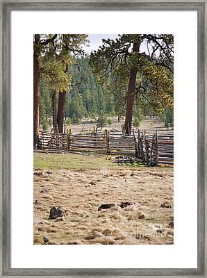 Woodland Corral - White Mountains Arizona Framed Print by Donna Greene