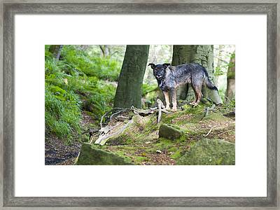 Woodland Dog Framed Print
