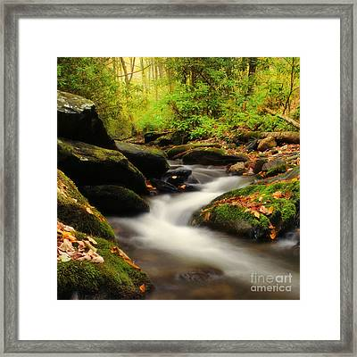 Woodland Fantasies Framed Print by Darren Fisher