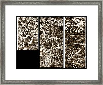 Woodland Finds Tryptich Framed Print by Dorothy Berry-Lound