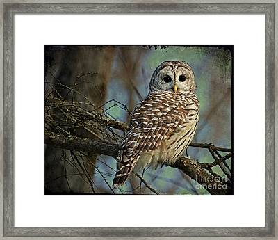 Woodland Goddess Framed Print by Heather King