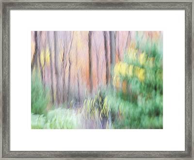 Woodland Hues 2 Framed Print