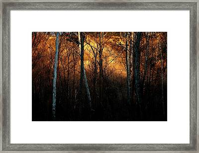 Framed Print featuring the photograph Woodland Illuminated by Bruce Patrick Smith