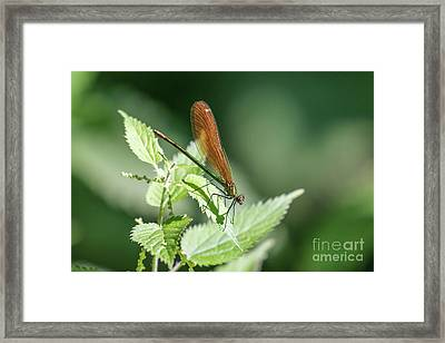 Framed Print featuring the photograph Woodland Jewel by Paul Farnfield