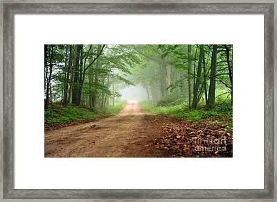 Woodland Journey Framed Print