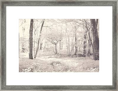 Framed Print featuring the photograph Woodland by Keith Elliott