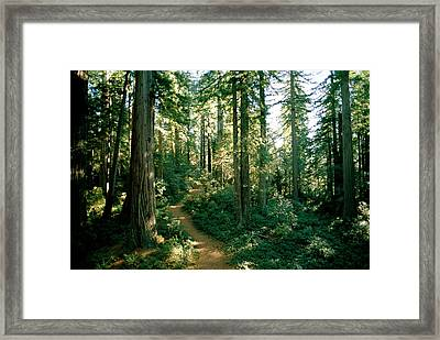 Woodland Path Winding Through A Grove Framed Print