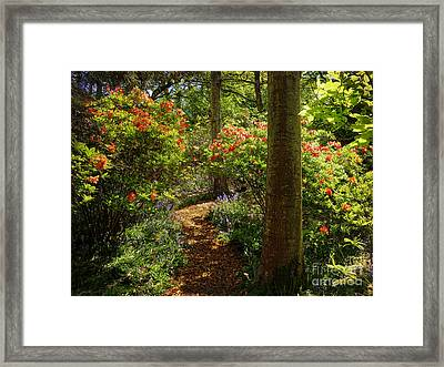 Woodland Path With Rhododendrons Framed Print by Maria Janicki