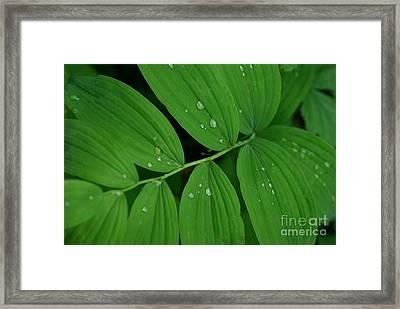 Woodland Rain Framed Print