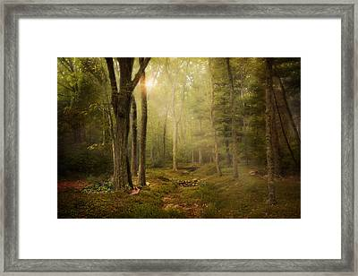 Framed Print featuring the photograph Woodland by Robin-Lee Vieira
