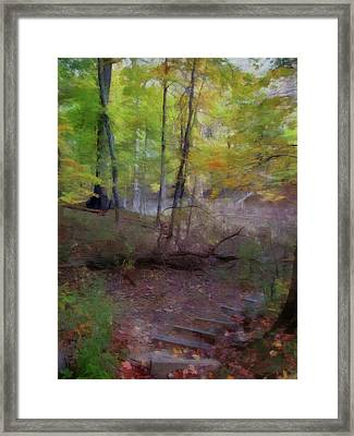 Woodland Steps Framed Print