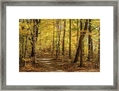 Framed Print featuring the photograph Woodland Trail At Mer Bleue by Rob Huntley