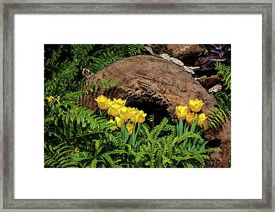 Woodland Tulip Garden Framed Print by Tom Mc Nemar