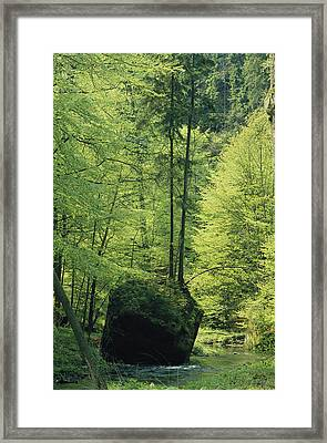 Woodland View With Stream, Sachsische Framed Print by Norbert Rosing