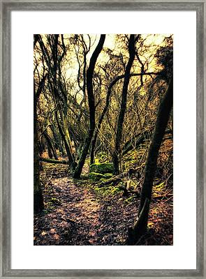 Woodland Wandering Framed Print by Vicki Field