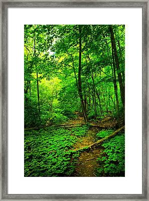 Woodland Way Framed Print