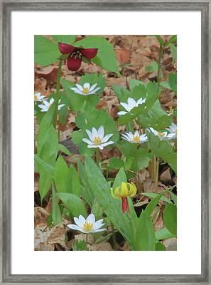 Woodland Wildflowers Framed Print by John Burk