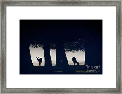 Woodland Windows Framed Print