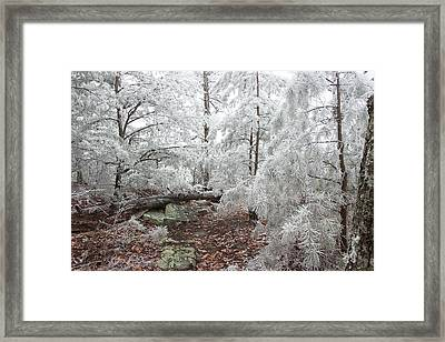 Woodland Wonder Framed Print by Mike Eingle