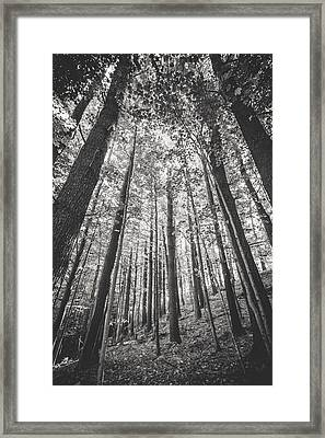 Framed Print featuring the photograph Woodlands by Robert Clifford