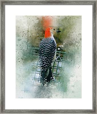 Woodpecker-2-a-8 Framed Print