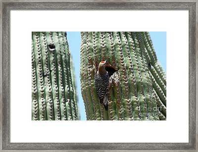 Woodpecker At The Nesting Hole Framed Print by Christiane Schulze Art And Photography