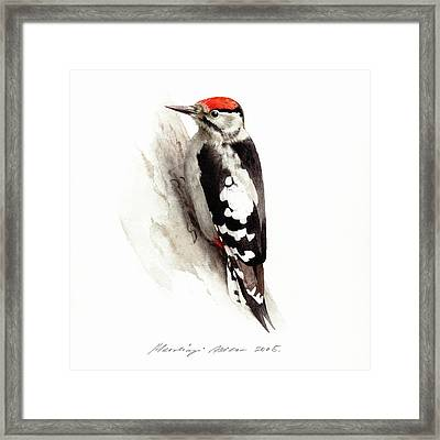 Woodpecker Framed Print