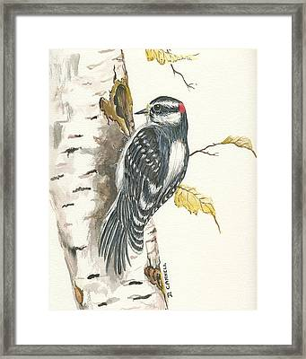Framed Print featuring the painting Woodpecker by Darren Cannell