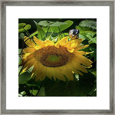 Woodpecker Delight Framed Print