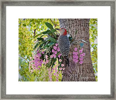 Woodpecker Heaven Framed Print