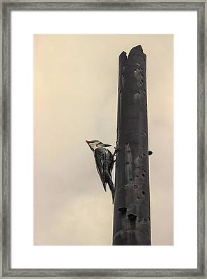 Woodpecker Framed Print by Martin Newman